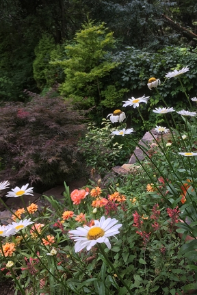 Shasta daisies, Agastache, and zinnias