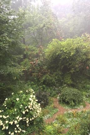 Garden in fog