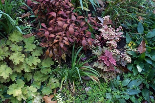 Heuchera and coleus