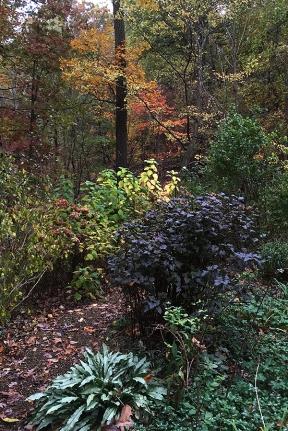 foliagecolors