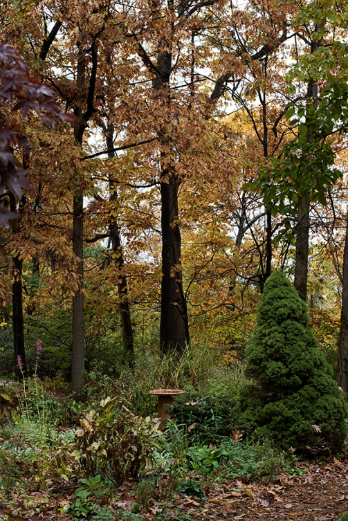 herbtreesfall