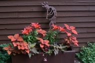 Lilies and Coleus 'Sedona'