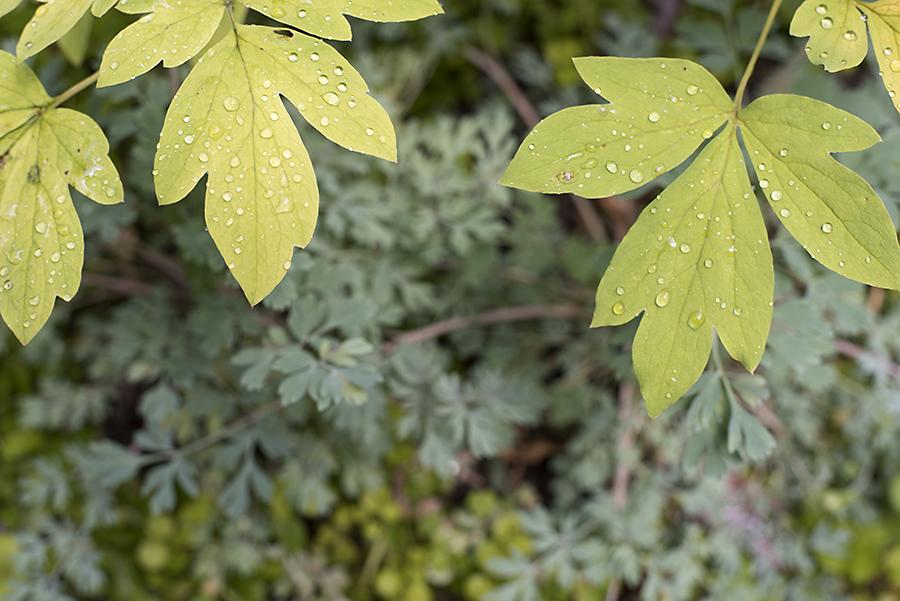 yellowbluefoliageWP