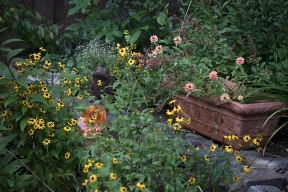 Zinnias and Rudbeckia