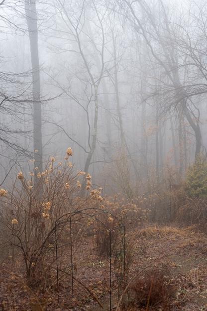 foggygarden