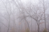 foggywoods