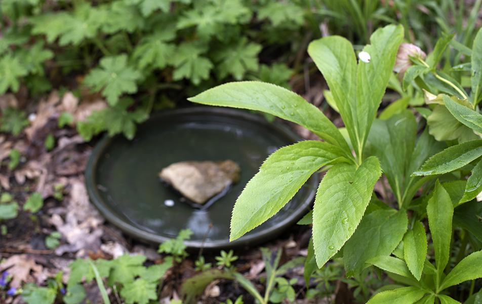 greenbirdbath