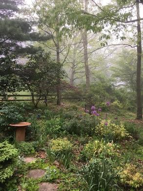 Front garden in fog