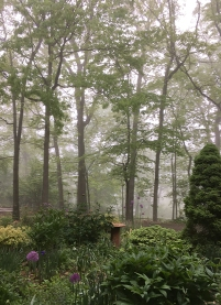Front woods in fog